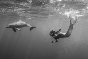 Mermaid Kat swimming with dolphins in Egypt