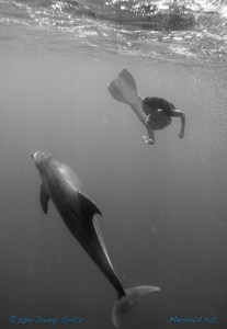 Professional Mermaid swimming with dolphins in the Red Sea