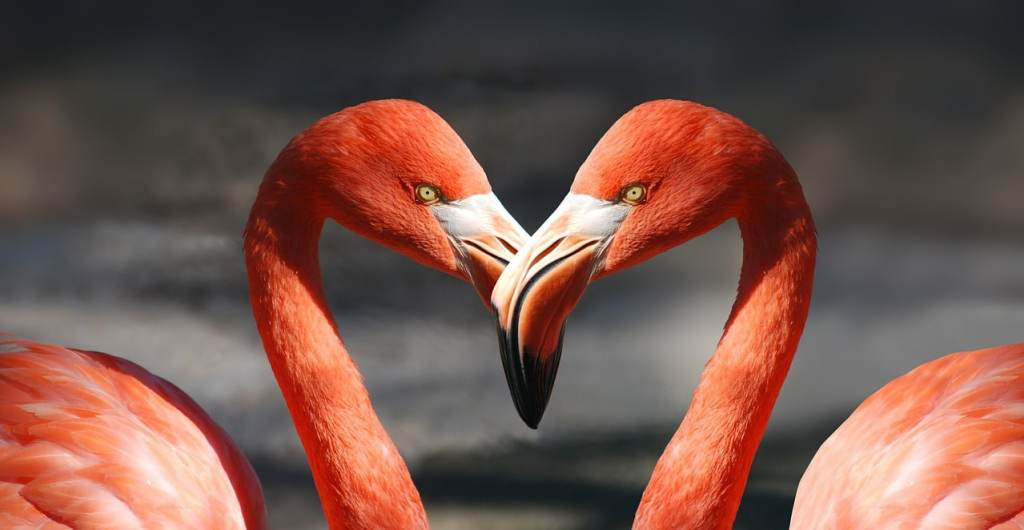 Valentines day flamingo