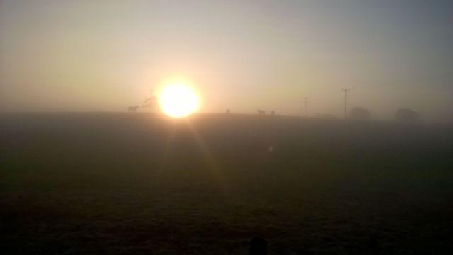 Misty Merok Mill House Morning Horses in the mist