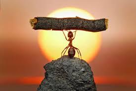 ant plant