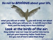 Scripture--Matthew 6:25-26 on a photo of a seagull hovering in the air