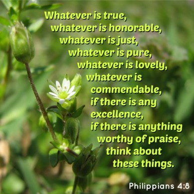 SCRIPTURE -- Philippians 4:8 written on the photo of a tiny flower