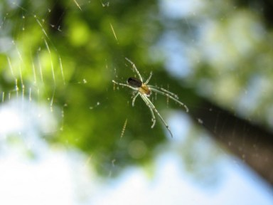 macro photo looking up at tiny spider on web