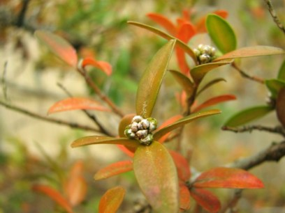 macro photo of orange leaves and buds on a bush