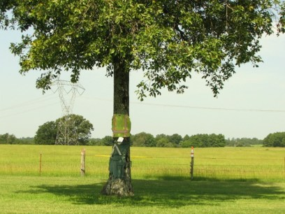 tree wearing safety vest and clothing near farmer's fields