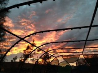 sunset against trellis