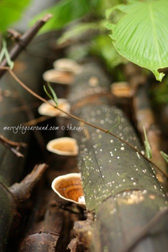 wild fungus