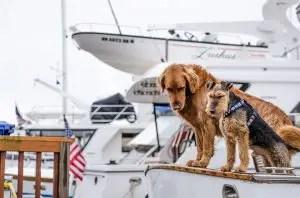 deux chiens sur un trawler
