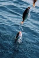 poisson de traine