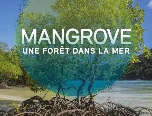 mangrove une foret dans la mer