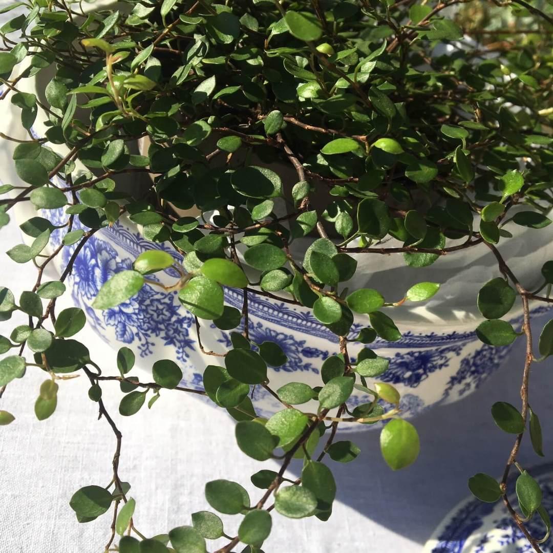 soupière bleue Lunéville fleurie ancienne