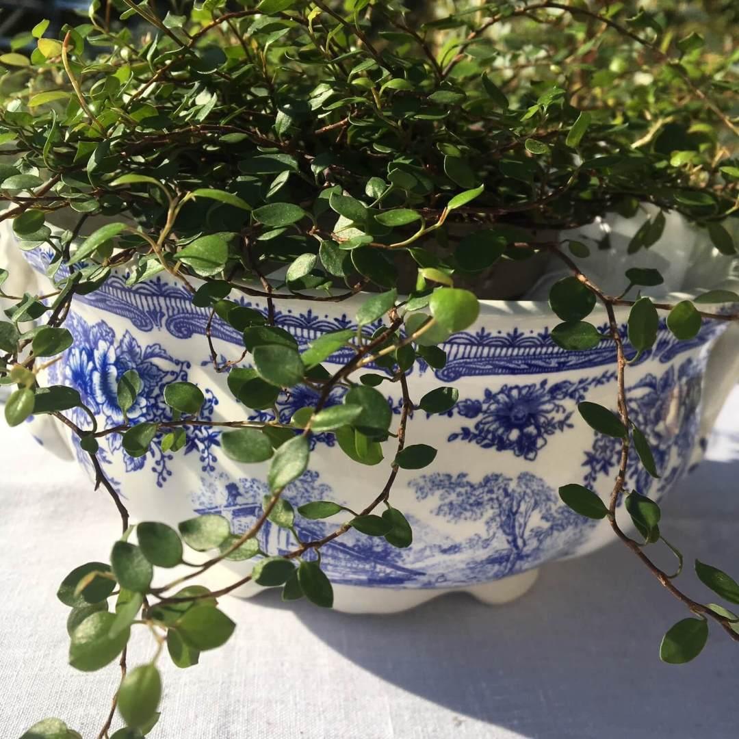 soupière bleue Lunéville fleurie