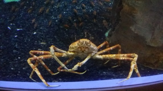 These crabs were creepy af