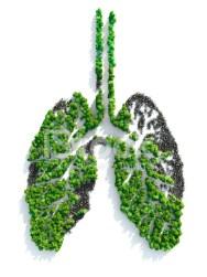 poumons planète