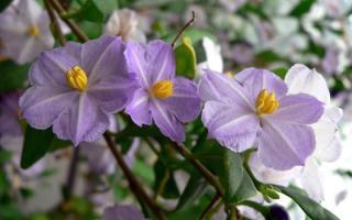 fleur jeanne barret tour du monde