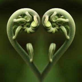heart frond