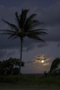Kipahulu palms in the moonlight