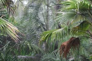 palms in rain by kb