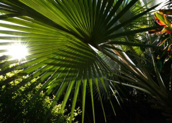 matt thayer merwin palm c 10-15-14