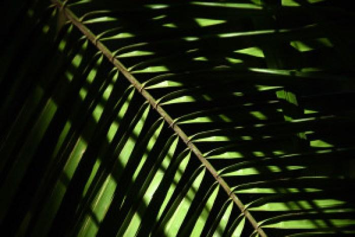 matt thayer merwin palm frond 101-5-14