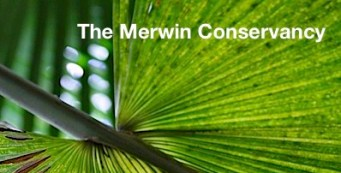 Happy Thanksgiving from The Merwin Palm Forest!