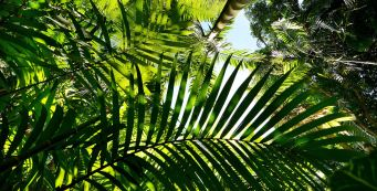 New Blog Series Launched: Palm Fact of the Week