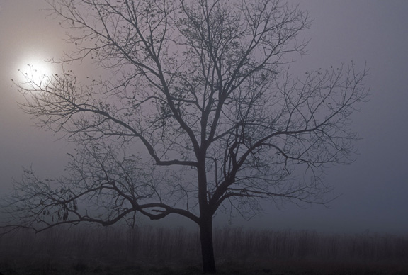 The Walnut Tree by Jim Dollar, used under CC BY-NC 2.0
