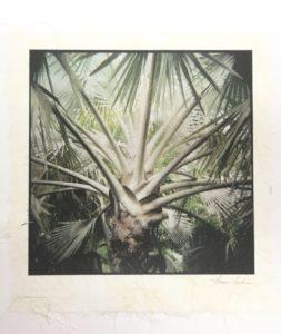 Madagascar Palm, by Gwen Arkin