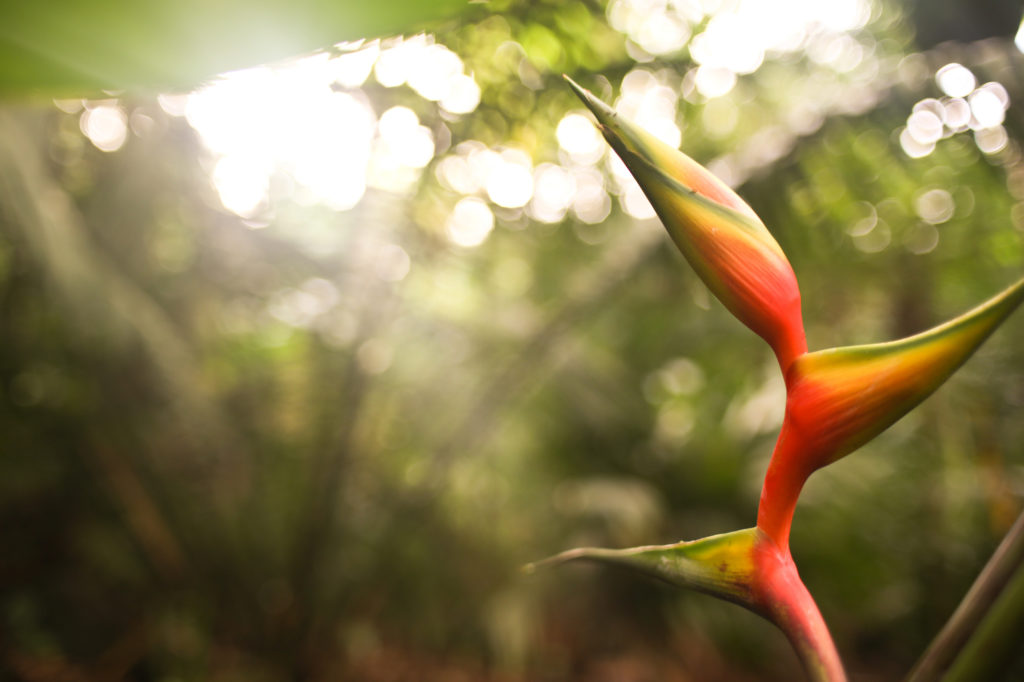 Bird of Paradise in Merwin Palm Forest - Morgan Jones