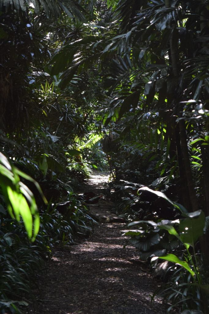 Merwin Palm Forest Path