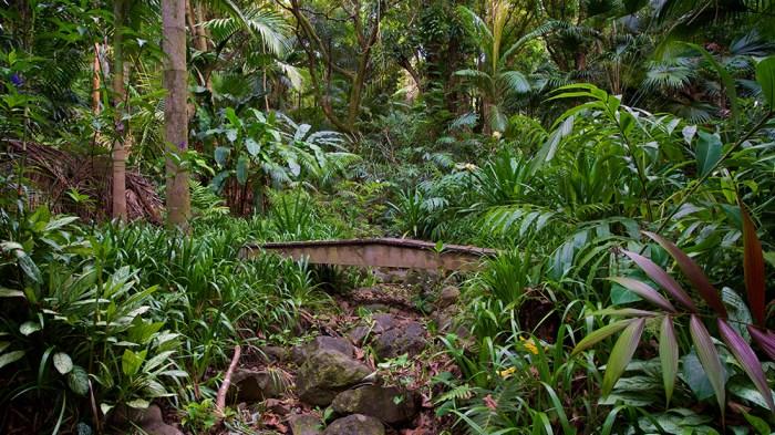 Merwin's Bridge - Peahi Stream Valley - Photo by Larry Cameron