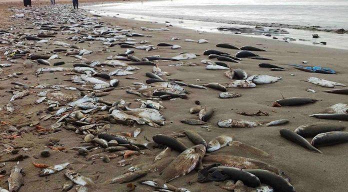 Mortandad de peces por el vertido de fosfoyesos en Gabès (Túnez)