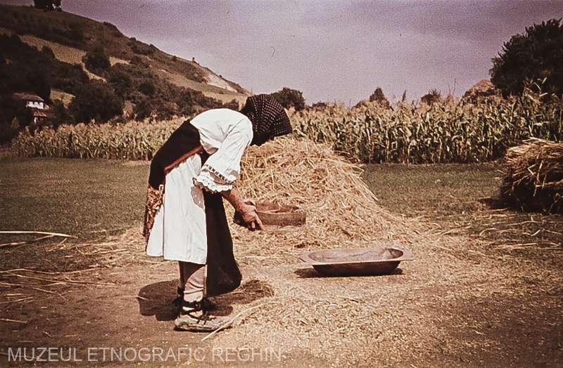 MESERII UITATE : Secerişul manual şi ritualurile din jurul pâinii aproape au dispărut în mediul rural