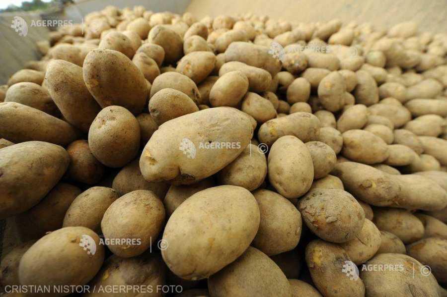 Preşedintele FNCR: Cartoful a fost şi este pâinea a doua a românilor; trebuie să o tratăm ca atare