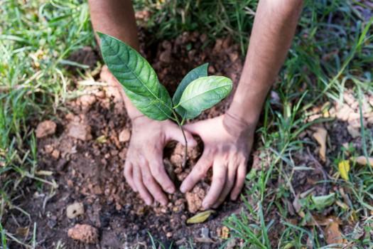 APIA primeşte cereri de plată pentru ajutorul de stat privind prima împădurire şi crearea de suprafeţe împădurite