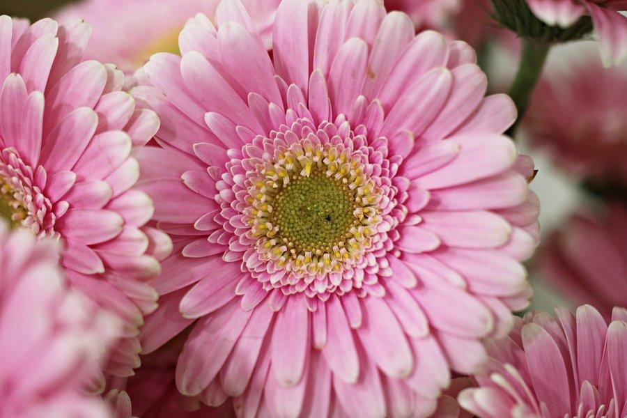 Cum alegi florile potrivite pentru prima intalnire? Alege buchetul potrivit de la o florarie online