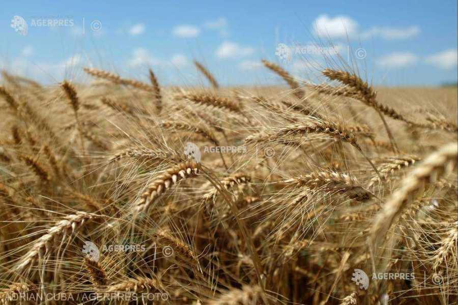 România, locul şase în Uniunea Europeană la producţia de grâu obţinută anul trecut