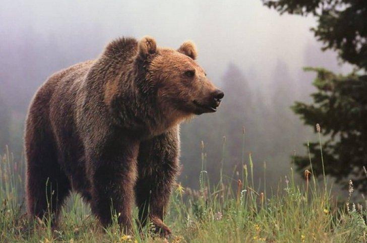 Senatorul UDMR Fejer Laszlo-Odon: Problema urşilor - scăpată de sub control; se transmit în spaţiul public informaţii false