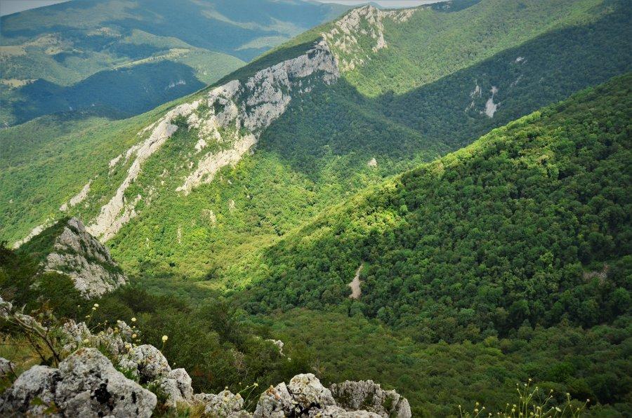 Judecătorii Curții de Apel Brașov încep dezbaterile în dosarul retrocedării ilegale a peste 43.000 hectare de pădure în județul Bacău