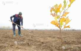 Lucrări de regenerare a pădurilor pe 25.189 hectare, efectuate anul trecut (INS)
