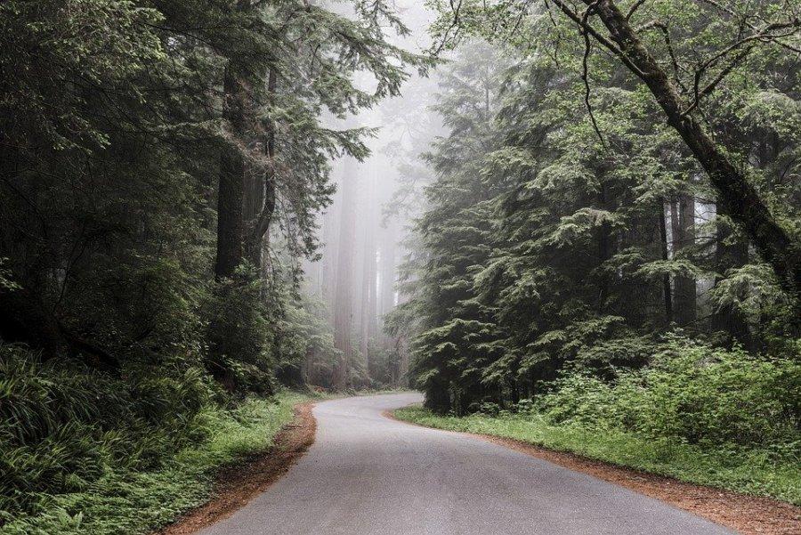 Mihaiu: În ritmul în care ne aflăm, în 20 de ani rămânem fără păduri; avem nevoie de decidenţi la nivel de premier