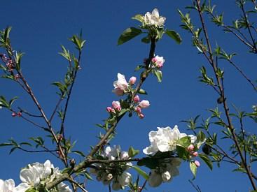 Matin de printemps au jardin ... Loir-et-Cher - Photo Kazamarie
