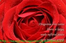 POZE IMAGINI SMS DE DRAGOSTE SI IUBIRE (1)
