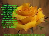 POZE IMAGINI SMS DE DRAGOSTE SI IUBIRE (53)
