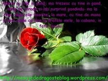 POZE IMAGINI SMS DE DRAGOSTE SI IUBIRE (67)