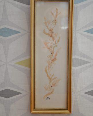 """Cadre d'algues rectangulaire. Inscription au dos """"les algues qui composent ce tableau sont absolument naturelles et n'ont subi aucun traitement de coloration. Il est recommandé d'éviter l'exposition au soleil""""."""