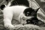 Le Niksen ou l'art de ne rien faire comme les chats