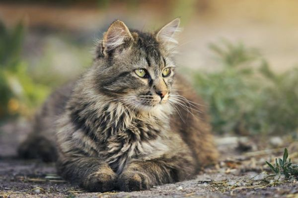 Les chats et le Niksen
