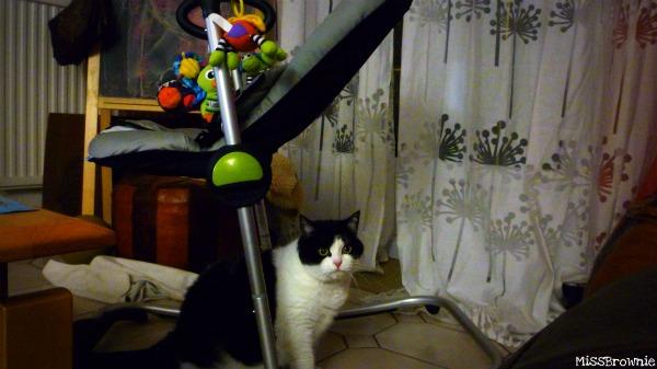 chat-et-transat-bebe